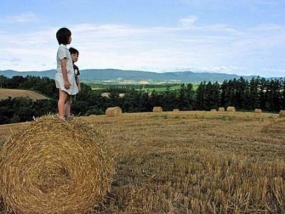 ブログ牧草ロール
